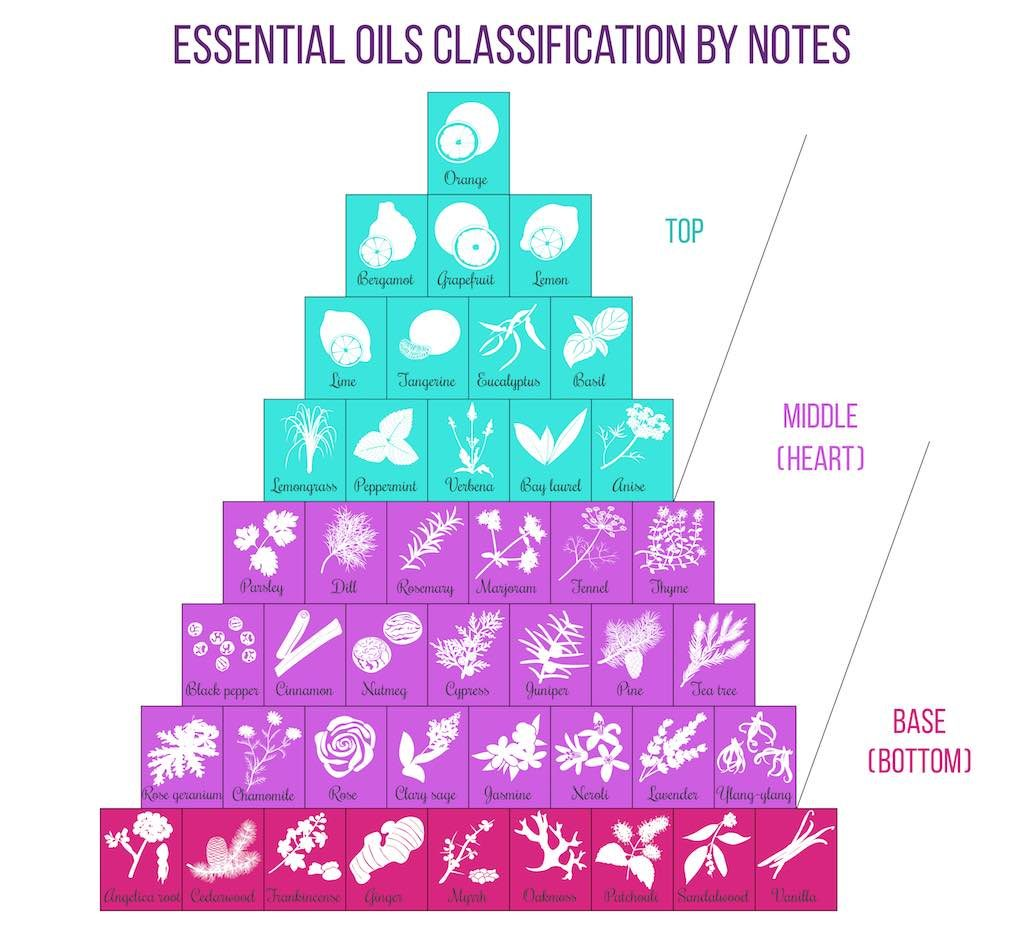 Aromatherapy Classification Infographic